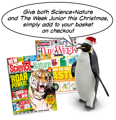Science+Nature Xmas penguin 2